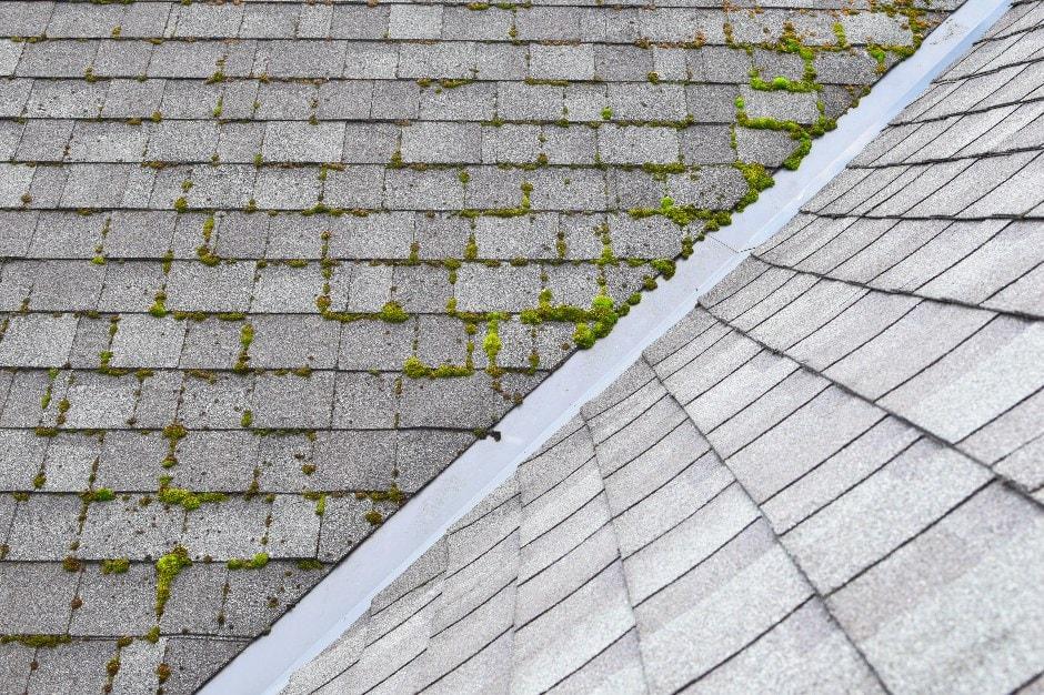 roof damage lichen